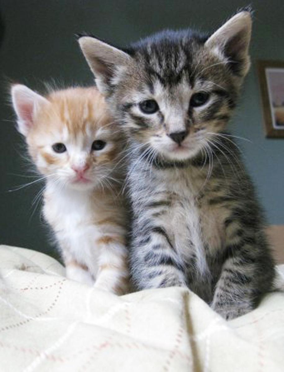 Sammy & sister